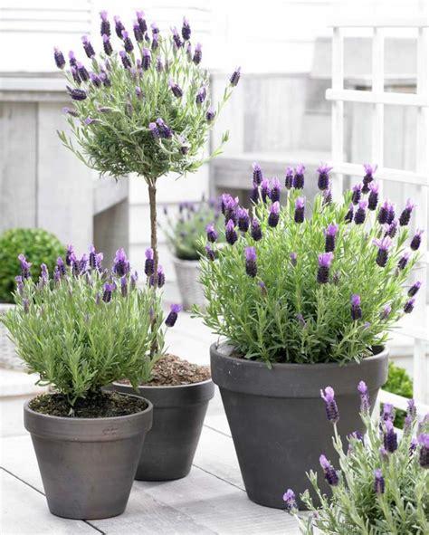 plante ext 233 rieur en pot en 35 id 233 es d 233 co