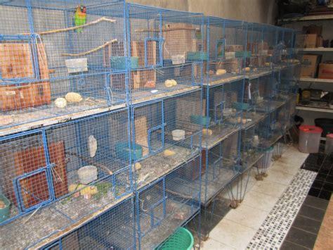 Tempat Pakan Ternak Lovebird Koloni lovebird quot hoby yang menguntungkan november 2015