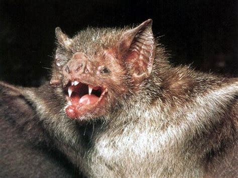 10 interesting bat facts my interesting facts