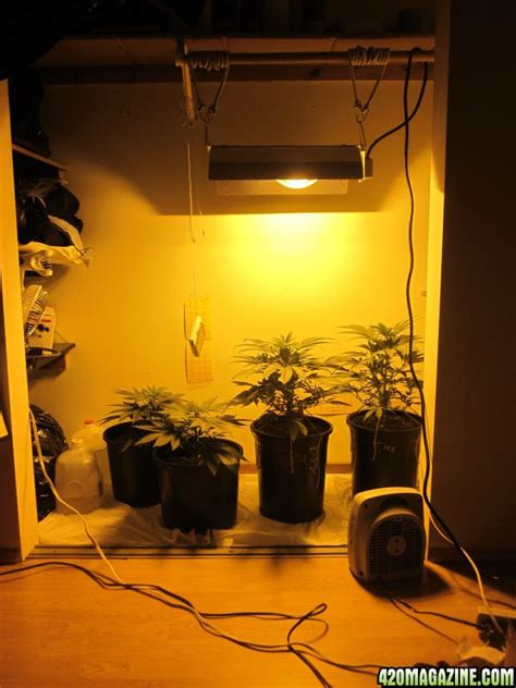 Best Lights For Growing In Closet by 400w Hps 5x2 Closet