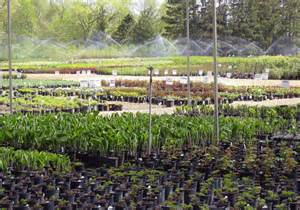 Plant Nursery Abrahamson Nurseries About Us Landscaping Services