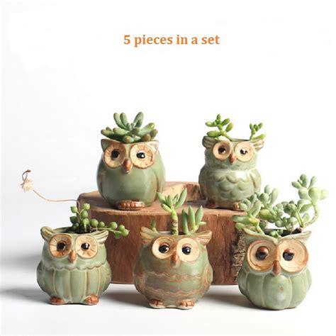 pcset cartoon owl shaped flower pot  succulents