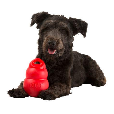 kong puppy kong toys pawfect petwear
