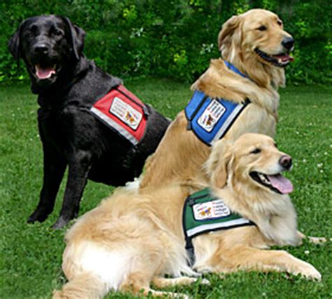 what are service dogs used for best breeds to use for service and therapy all pet news