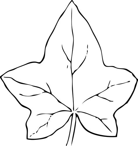 leaf pattern black and white clipart ivy leaf 2 black white line art coloring book