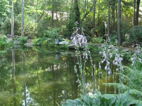 the trout pond in the backyard of the bruce s cabin in