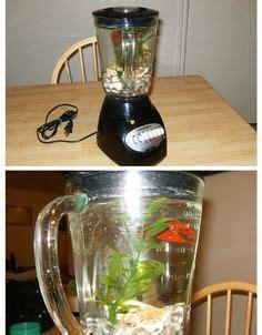 sized aquarium MADE FOR FISH   Non Functioning Blender Betta Fish