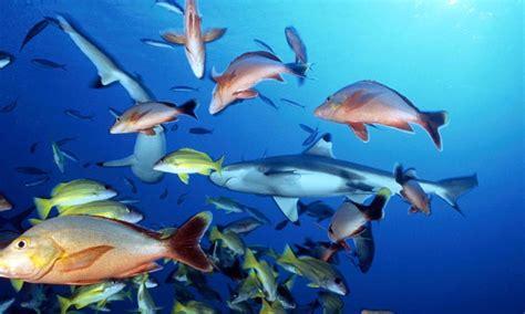 los peces de la principales grupos de peces
