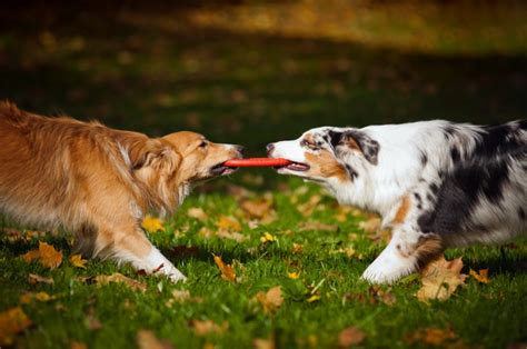 socializing dogs 4 tips for socializing your