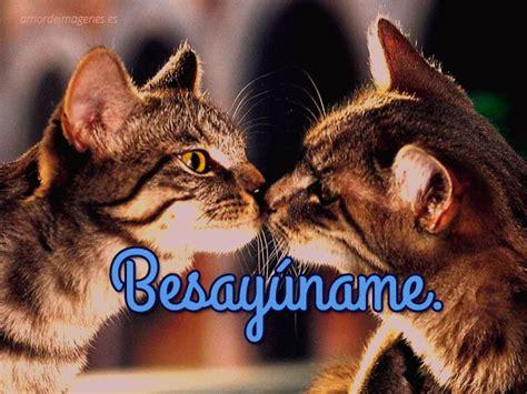 imagenes de gatitos tiernos  llenos de amor