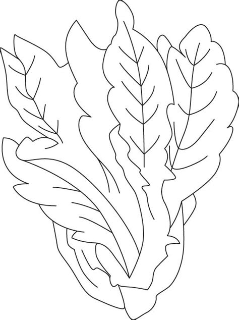 lettuce leaf coloring page best photos of lettuce coloring pages lettuce coloring