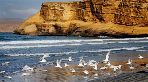 en la reserva nacional de paracas se inicia la temporada de verano y paracas recorre la reserva nacional en su aniversario