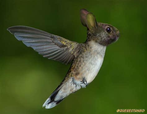 imagenes increibles de animales animales incre 237 bles colibr 237 conejo