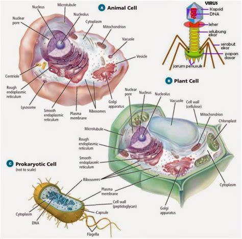 Biologi Sel Edisi 7 7 penjelasan lengkap perbedaan sel hewan tumbuhan dan bakteri pintar biologi