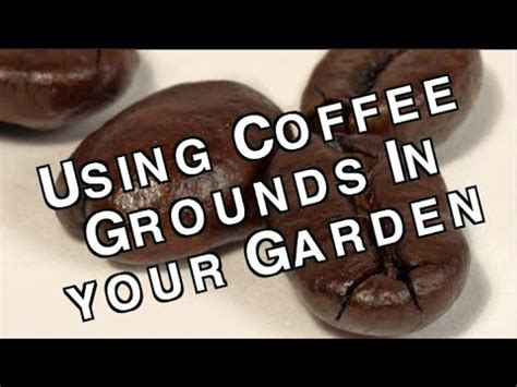 Are Coffee Grounds For Your Garden by Spent Acid