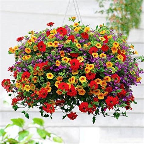 prezzi fiori semi fiori balcone al prezzo migliore offerte opinioni