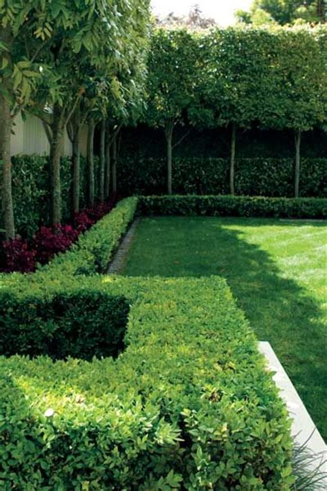 25 Best Ideas About Hedges Landscaping On Pinterest Hedging Ideas For Gardens