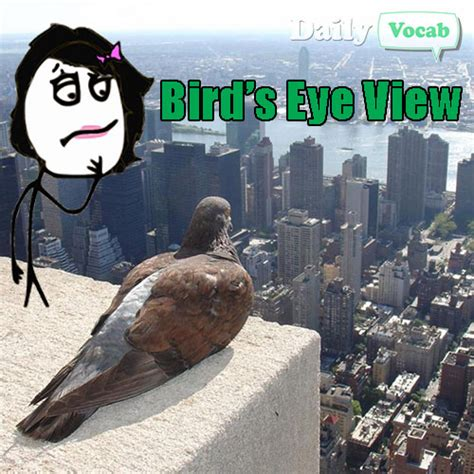 Meme And Then I Said Mba by Bird S Eye View Meaning In With Picture Dictionary