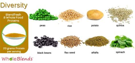 whole grains with the most protein blendfresh whole food proteins