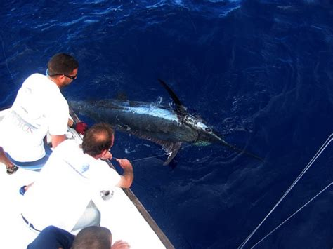 deep sea fishing boat trips deep sea fishing and boat trips azores go discover