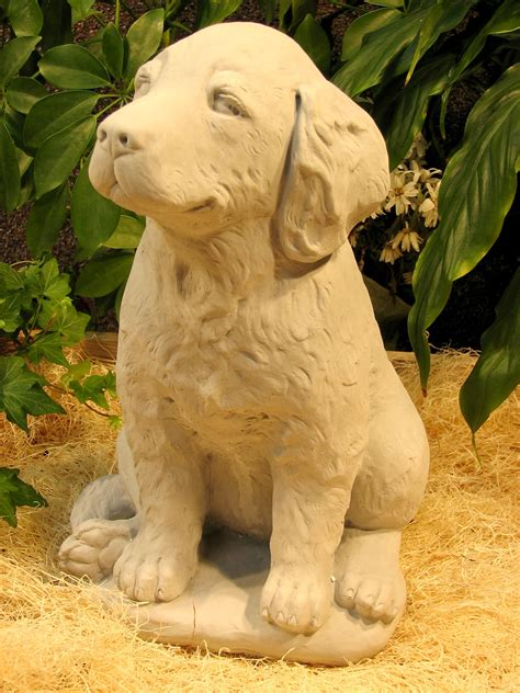 gray golden retriever puppies golden retriever puppy
