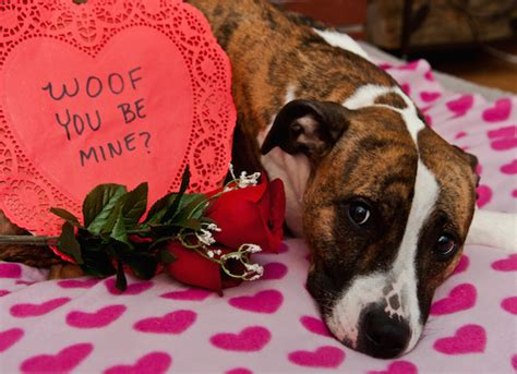 pet valentines be petmd
