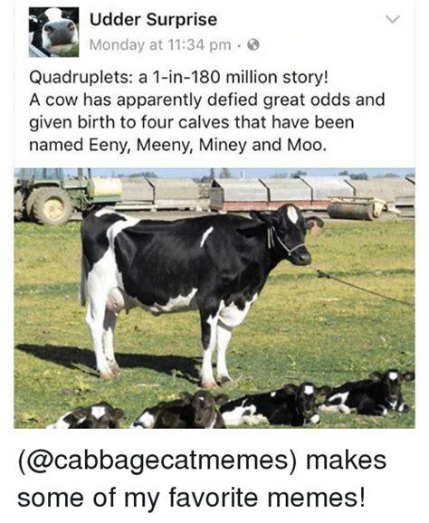 Calves Meme - 25 best memes about udder udder memes