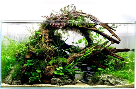 driftwood aquascape design aquarium driftwood aquariadise