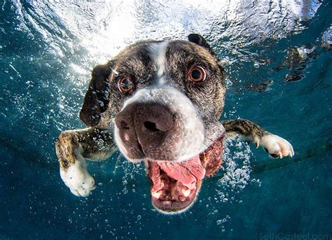 underwater dogs jump in the pool and giggle uncontrollably with underwater dogs mnn