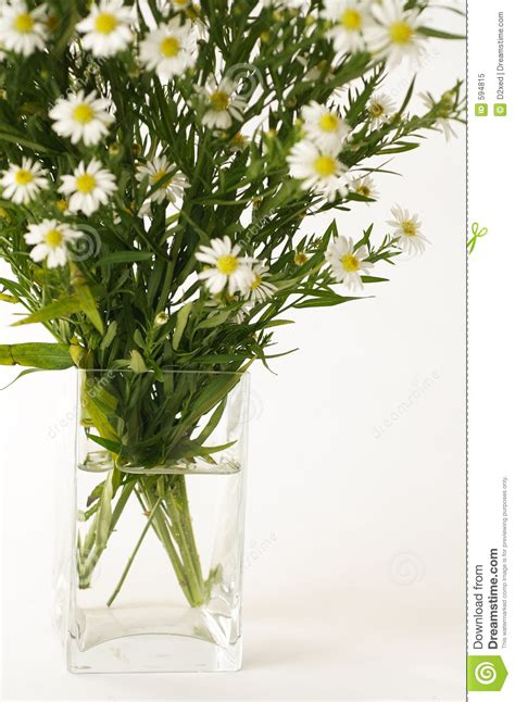 Flowers In White Vase by White Flowers In A Vase Royalty Free Stock Photo Image