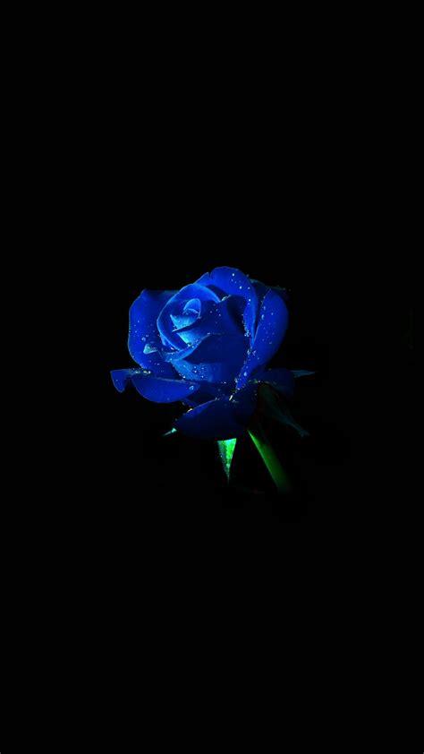 papersco iphone wallpaper  blue rose dark flower