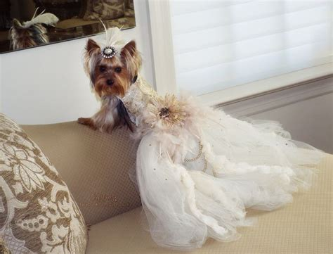 yorkie wedding cierra s birthday bash yorkie wedding birthdays and dresses