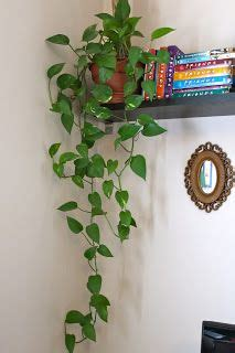 plants to keep in bathroom 25 best ideas about indoor hanging plants on pinterest