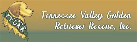 tennessee valley golden retriever rescue tennessee valley golden retriever rescue inc home