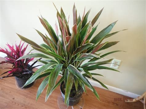 whats  stock current tropical plants  exotica