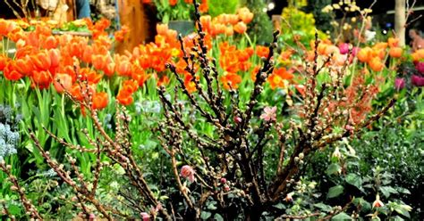Flower And Garden Show Seattle 2015 by Seattle Flower And Garden Show 2015 Seattle Flower And