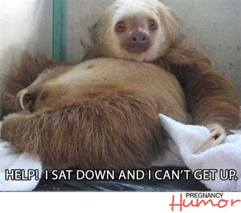 Funny Pregnant Memes - 10 funny pregnancy memes featuring animals page 10 of 10