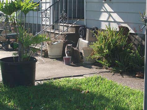 file cat in backyard jpg wikimedia commons