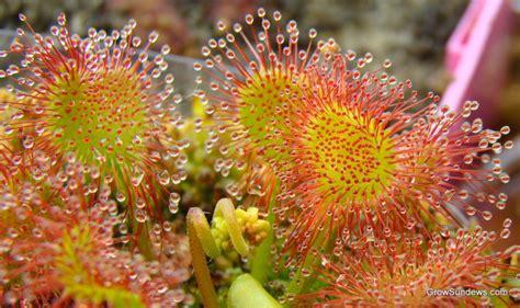 Loyang Silikon Bunga Dan Serangga ulasan lengkap fungsi bagian jenis bunga serta gambar