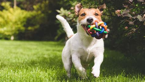 best top chions 7 best to play with dogs top tips