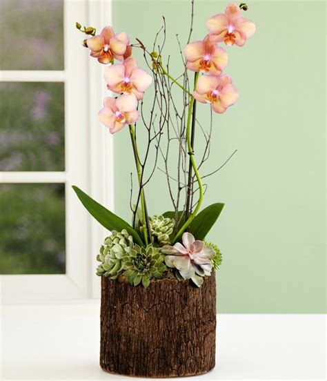 potted orchid centerpieces the 25 best potted orchid centerpiece ideas on