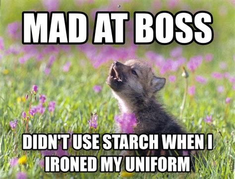 Mad Wolf Meme - livememe com baby insanity wolf