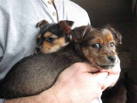 small mixed breed puppies for sale pictures small mixed breed dogs breeds picture