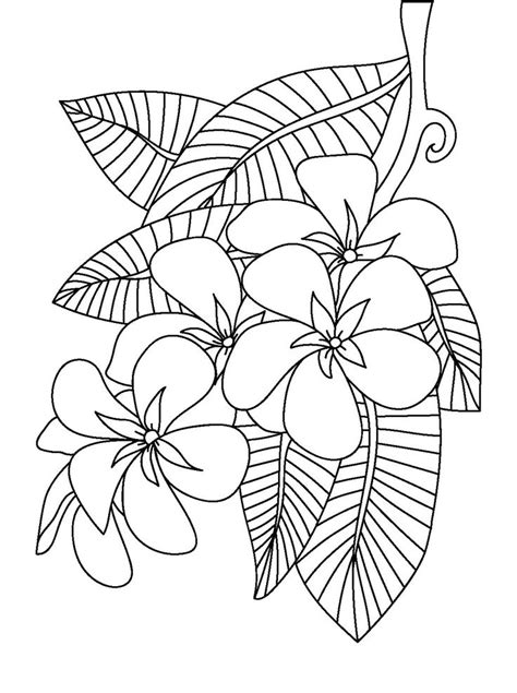 coloring book for adults markers 1000 images about floral coloring pages for adults on