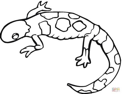 cute gecko coloring pages coloriage gecko color 233 coloriages 224 imprimer gratuits