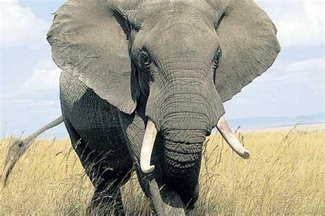 Elephant   ferrebeekeeper