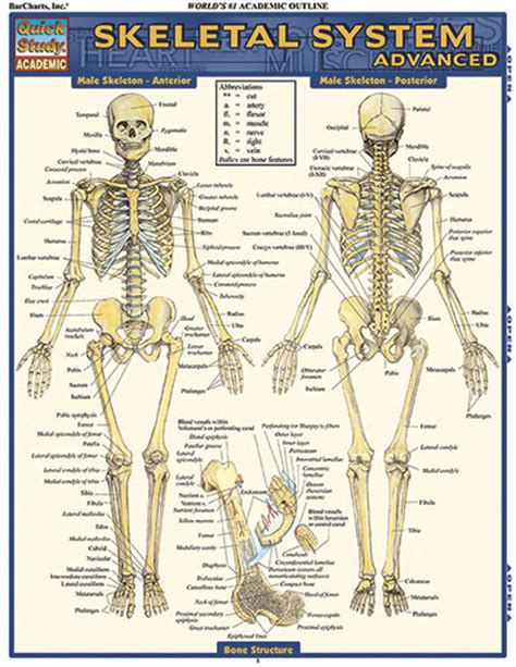 study guide for the human in health and illness 6e books barchart skeletal system advanced study guide