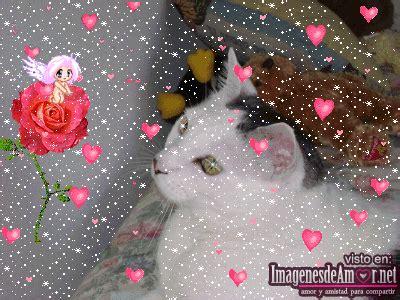 imagenes muy bonitas para el 14 de febrero imagenes de amor y amistad para el 14 de febrero muy
