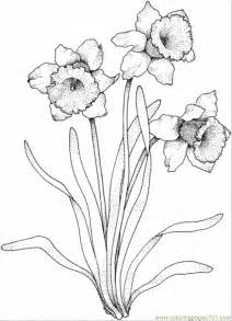 coloring pages daffodil flowers daffodil flower tattoo coloring pages
