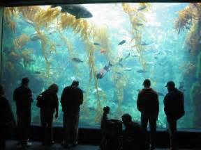 Wedding Venues In San Diego File Kelp Tank Birch Aquarium At Scripps 2007 Jpg Wikimedia Commons